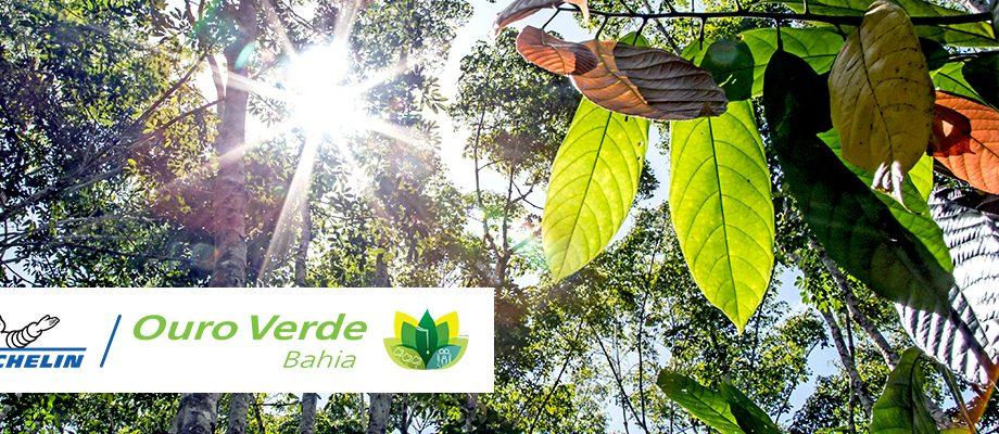 Visual for Ouro Verde Bahia