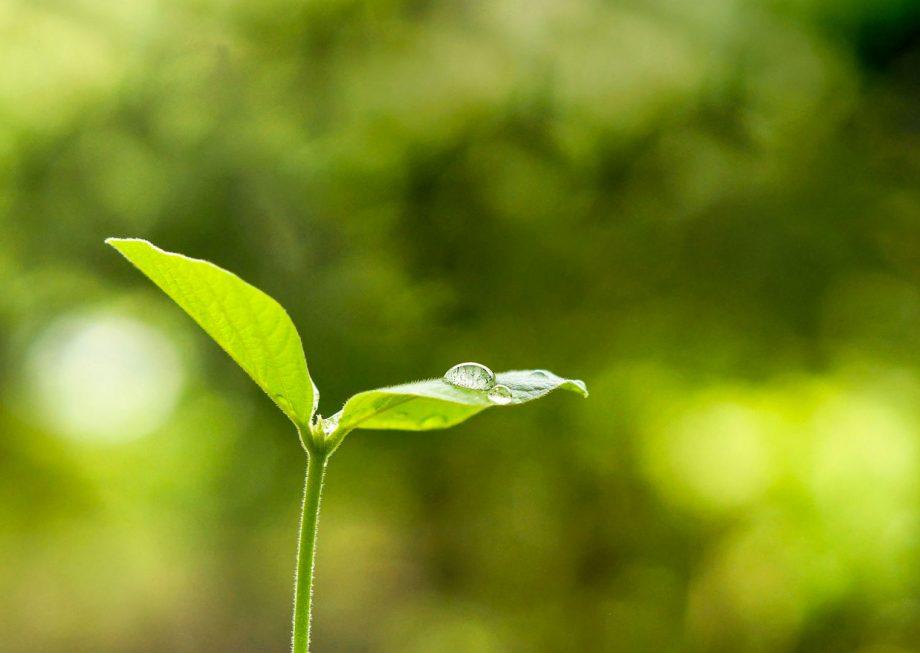 Zoom sur une plante avec une goutte d'eau dessus